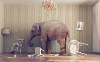 Elefant zerstört Holzmöbel