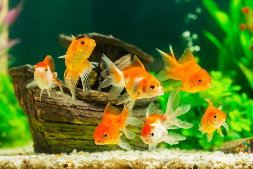 Aquarium bauen