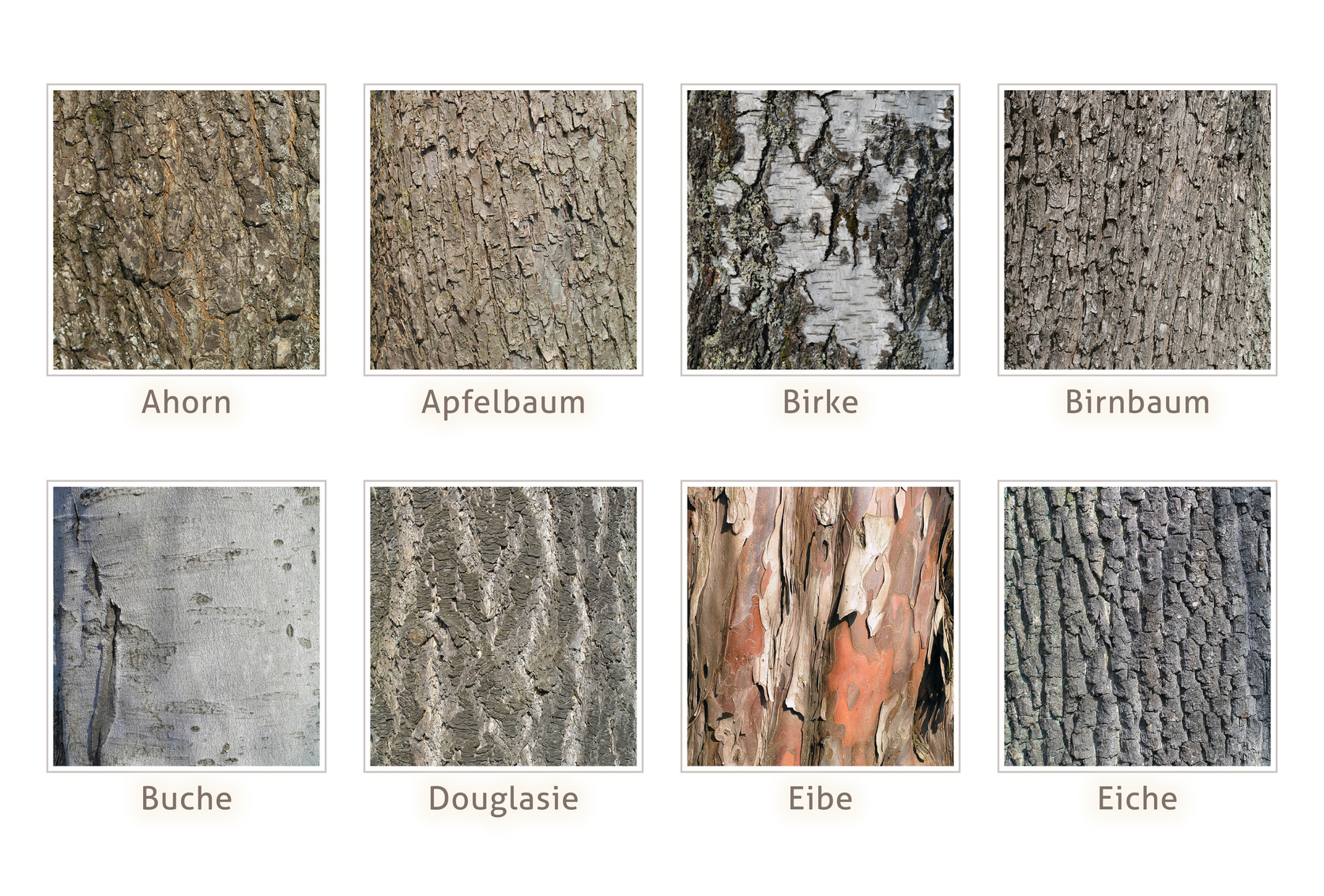 Holzarten – Eigenschaften, Aussehen und Herkunft